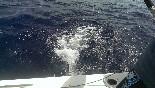 Actividades pesca (12)