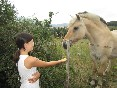 casa rural gure txokoa caballo