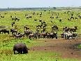 La Sabana. Kenia