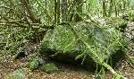 Bosques Teixadal