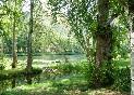 Bosque Valdeorras