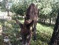 Nuestro burro