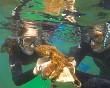 Haciendo snorkel en Noja