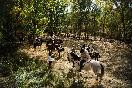 Rutas a caballo por extremadura (10)