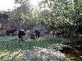 Rutas a caballo por extremadura (32)