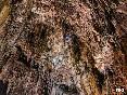 Sima de perlas cueva de valporquero, león