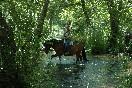 Sanabria a caballo (3)