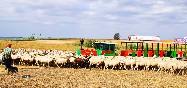 Conocehuelva-tren-ovejas