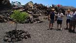 Excursion safari lanzarote papagayo ruta10
