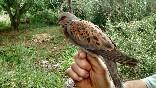 Anillamiento aves (2)