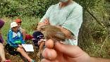 Anillamiento aves (7)