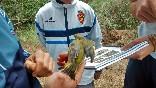 Anillamiento aves (8)