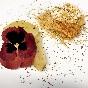 Nido de pasta kataifi con ricotta vegana, reducción de vermouth y pera asada