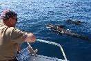 Observación cetaceos (1)