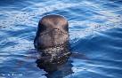 Observación cetaceos (4)