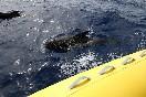 Observación cetaceos (5)