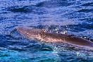 Observación cetaceos (8)
