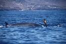 Observación cetaceos (9)