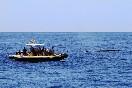 Observación cetaceos (14)