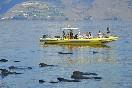Observación cetaceos (15)