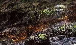 Cueva de las guixas (6)