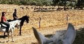 Entre toros y caballos (1)