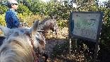 Entre toros y caballos (2)