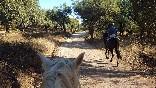 Entre toros y caballos (4)