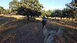 Entre toros y caballos (6)