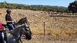Entre toros y caballos (8)