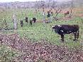 Entre toros y caballos (13)