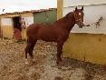 Entre toros y caballos (14)
