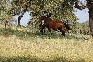 Entre toros y caballos (17)