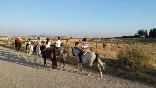 Entre toros y caballos (19)