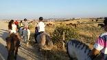 Entre toros y caballos (20)