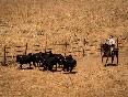 Entre toros y caballos (24)