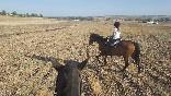 Entre toros y caballos (25)