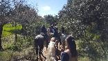 Entre toros y caballos (27)
