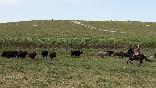 Entre toros y caballos (29)