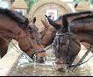 Entre toros y caballos (30)
