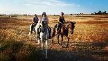 Entre toros y caballos (33)
