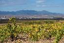 Estancia entre viñedos en Tierra de Cubas