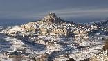 Morella nevado